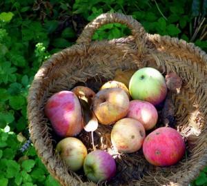 Apfel und Apfelallergie