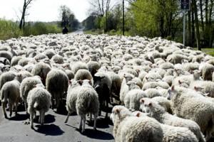 Autobauer VW schwarze Schafe